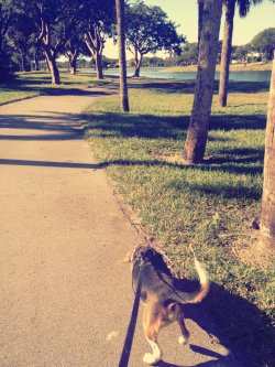 Had a great walk this morning around the lake with my best friend Arthur <3 (Taken with picplz.)