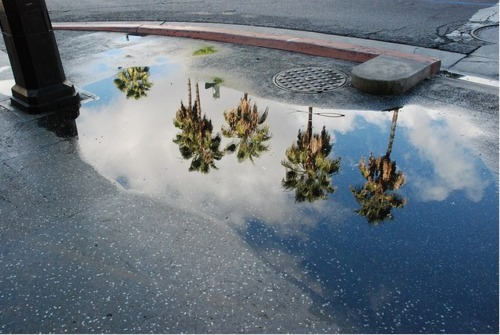 Wish we all could be California girls…. patrickdicesare:  Palm Trees