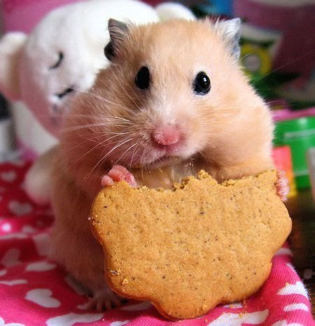 -foodporn:  Browsing through pictures of food and came across this cute photo :3 My heart melted.