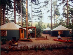shredlizard:  Umpqua State Park, Oregon Camped there few years ago.