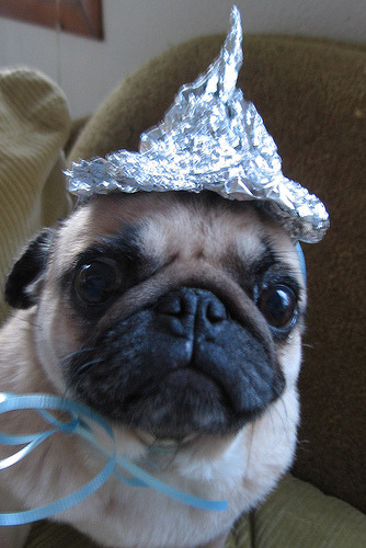 BOL! Trying to keep the aliens out of your head, puggy?