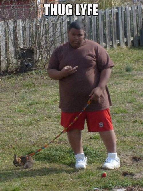 "collegehumor:  Gangsta Takes Pet Rabbit for a Walk In his defense, a dog named ""Bun B"" would just look silly."