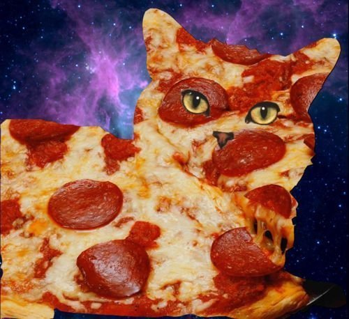 Mmmm, pizza kitty