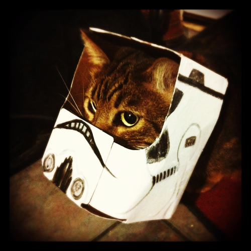 Storm Trooper Helmet Boy! Mooki finally decided to stick his head in it the right direction and sit still for a good shot before running off.