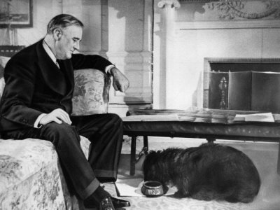 "The Most Photographed Dog In The World It was Franklin Roosevelt's Fala, a Scottie, who epitomized the title of first dog. Called the ""most photographed dog in the world,"" Fala was [Franklin Roosevelt]'s constant companion, traveling all over the globe with the president. This ""tail-wagging busybody"" is said to have won FDR a million votes due to the famous ""Fala"" speech in the 1944 campaign. Responding to Republican attacks, including reports he sent a destroyer to the Aleutians to retrieve the dog, Roosevelt said, ""I am accustomed to hearing malicious falsehoods about myself … but I think I have a right to resent, to object to libelous statements about my dog."" Fala further enhanced Roosevelt's popularity when he fathered two pups, Meggy and Peggy. — The Washington Post, 1989"