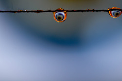 tmag26:  Eyes on a string (Copyright Tim Maguire, 2012)
