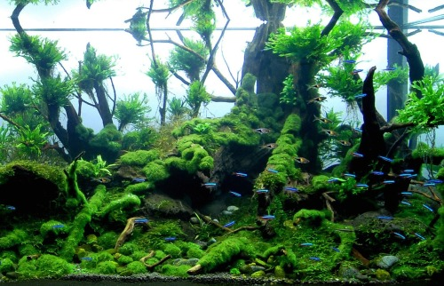 nitlon:  n o I have changed my mind you get pretty aquascapes on your dash (anyone know the source for this? been on my computer for ages)
