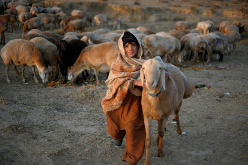 A Pakistani nomad boy runs with his sheep on the outskirt of Islamabad  on Jan. 10, 2012. Nomads travel from Pakistan's northern areas to the  plain areas in winter to shield their livestock from the freezing winter  temperatures.  Follow us on Facebook | Twitter or Submit something or Just Ask!
