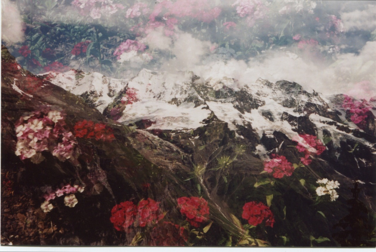 Swiss Alps & Pink Flowers