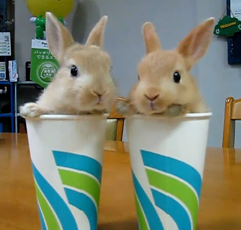 Thirsty? I'll take two cups of cute to go, shaken not stirred.