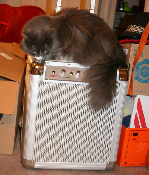 Jailie approves of the Block Rocker by Aurora Tigress on Flickr.