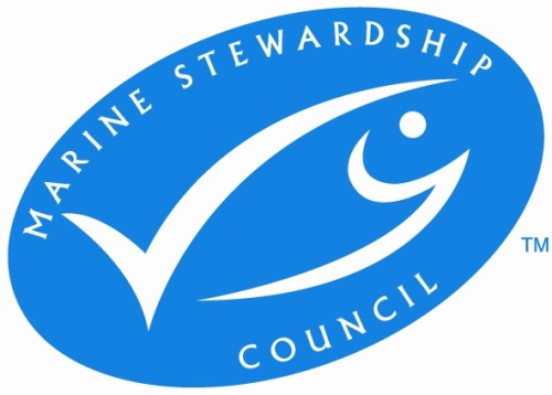 "Eco label granted for swordfish caught on controversial longlines   Consumers who buy one company's swordfish caught off eastern Florida will see a blue and white label at the store that assures them the fish was caught with utmost care for life in the Atlantic Ocean. The company awarded the eco label, Day Boat Seafood of Lake Park, Fla., says it's a reward for years of working to take only fish from a healthy population. Conservationists, however, are concerned because most of the company's swordfish are caught on surface longlines, which sometimes stretch for 30 miles, with hundreds of hooks. ""Long-line fisheries catch whatever is swimming by,"" said Teri Shore of SeaTurtles.org, an advocacy group that objected to the certification by the Marine Stewardship Council (MSC). ""It's not sustainable for the oceans."" The MSC's certification for Day Boat Seafood, granted in December, was the first for any fish in the world caught on ocean-surface longlines. The eastern Canadian longline swordfish industry, which is five times larger and sells mainly to the United States, is waiting for a decision, expected soon, about whether it will also get the MSC's label.. An assessor reviewed the case of the Canadian fishery and recommended certification. An independent judge is reviewing objections. The label is a marketing tool. Some consumers make purchase decisions based on it. Stores such as Wal-Mart, Target and Whole Foods say they intend to carry MSC-certified fish. The MSC website says its vision is ""the world's oceans teeming with life, and seafood supplies safeguarded for this and future generations."" The MSC sets standards and grants its certification once an independent assessor determines they're met. Shore said that one of her biggest concerns is that the MSC doesn't consider how the effects in different places add up. ""They look at each fishery as if no other fishery existed. That is not a sustainable perspective. That's the problem,"" she said. Turtles and swordfish migrate between Canada and Florida. Shore said her group argued that there's not enough information to know whether or not longlines harm sea-turtle populations. Leatherbacks are listed as being in danger of extinction. Loggerheads are listed as threatened, which is defined as likely to become endangered in the foreseeable future. ""The bottom line from our point of view for sea-turtle protection is, after 40 years on the endangered species list, no U.S. population of sea turtles has recovered, and longline fishing remains one of the primary reasons,"" Shore said. Scott Taylor, a co-founder of Day Boat Seafood, disagreed. ""The fact of the matter is, this is really a non-issue,"" he said. ""It makes my blood boil."" He said that the real problems for turtles were from loss of habitat and collisions with ships and pleasure boats. Taylor said that his vessels have had no observed turtle deaths in the past five years. ""We do interact occasionally. A turtle will get either hooked or entangled in a line. I think there were something like 40 or 50 documented interactions over a five-year period, all of which were live releases."" Longlines also catch swordfish that are too small to keep, as well as sharks, diving sea birds, bluefin tuna and game fish such as blue marlins. Taylor said the amount of bycatch (unintended and unwanted catch) is low. U.S. law requires each boat to keep a bycatch log and send the reports to the National Marine Fisheries Service. NMFS observers go on about 10 percent of the trips, he said. Taylor said his company agreed to take extra measures, such as increasing the number of independent observers to verify the accuracy of its bycatch reports, to counter critics. In five years, he plans to have observers on all vessels. About 25 percent of Day Boat's swordfish catch is from buoy gear instead of longlines. One or two hooks are attached to each buoy. They're watched from the boat, and each line is hauled up quickly when it has a fish on it. Longlines, by contrast, generally aren't hauled in for eight hours or longer. Buoy gear produces less bycatch, but fishermen don't use it exclusively because they can't get enough fish, Taylor said. NMFS requires fishermen to get trained in how to release sea turtles. They also must use a type of hook that turtles are less likely to swallow. The vessels' location must be monitored. Observers join some fishing trips to check bycatch amounts. Lines must be long enough so that if turtles are snagged they can swim to the surface to breathe. NMFS also closes some areas for protection. ""We think it has worked,"" said Margo Schulze-Haugen, chief of the agency's highly migratory species management division. Turtle losses have declined to what scientists have determined are acceptable limits, she said. ""There are many longline fisheries in the world that do not take anywhere near the care of the ecosystem that the U.S. does,"" Schulze-Haugen said. SeaTurtles.org, however, argued that not enough is known about sea turtles to certify longlines like the ones Day Boat Seafood uses as sustainable. ""While this is a small fishery, there isn't enough observer coverage or scientific data to determine whether or not on its own it harms the sea turtle populations or not,"" Shore said. One area of uncertainty, she said, is how many turtles are released alive but die as a result of being hooked. One recent study by NMFS scientists and others, published Dec. 31 in a scientific journal, found that fewer female loggerheads nesting at Juno Beach in Florida were surviving in the ocean than previously thought. The scientists used satellite tagging to follow female loggerheads. They concluded that more studies were needed, but that if additional work verifies their findings, stronger conservation measures may be needed. Kerry Coughlin, regional director for the Americas with the Marine Stewardship Council, said the experts involved in the certification looked closely at the issue of endangered and threatened turtles. Conservation groups made suggestions, and the company agreed to implement some of them, Coughlin said. The end result is a gain for turtles, she said. Lee Crockett, who oversees federal fisheries policy at the Pew Environment Group, said that just because Day Boat Seafood got the eco label doesn't mean that all longline fishing is sustainable. ""I think Day Boat is unique in the way they approach their fishing and their business practices and their commitment to do a better job,"" he said. Jennifer Jacquet of the Sea Around Us Project at the University of British Columbia Fisheries Centre and colleagues criticized the MSC in an article in the journal Nature in 2010, saying that its standards aren't stringent enough. The article also said that the certifiers have a financial conflict of interest, arguing that those who are lenient get more work. In Canada, the Ecology Action Center in Halifax, Nova Scotia, said the MSC shouldn't certify the Canadian swordfish industry because the improvements it has promised to make aren't in place yet. The center and the Canadian conservation group David Suzuki Foundation have been calling for alternatives to longline fishing, arguing that too many sharks and sea turtles end up on the lines."