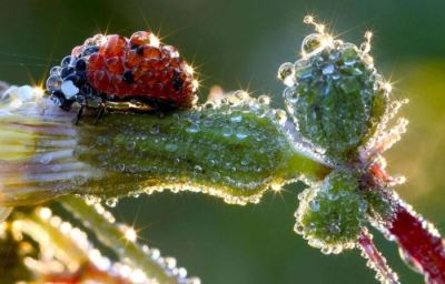 Amazing Nature Photo - Drops And A Bug