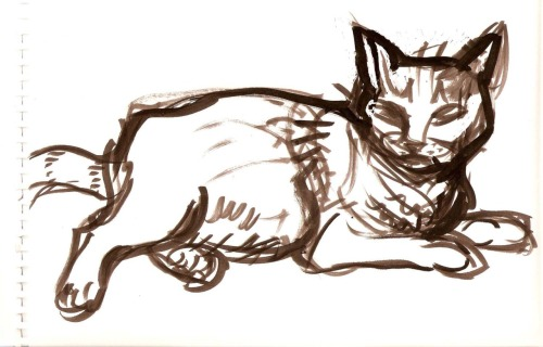 30 second brush painting of my cat by me, hoddleypoddley