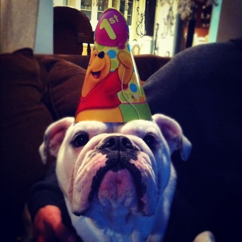 Happy 1st Birthday Stella!  (Taken with instagram)