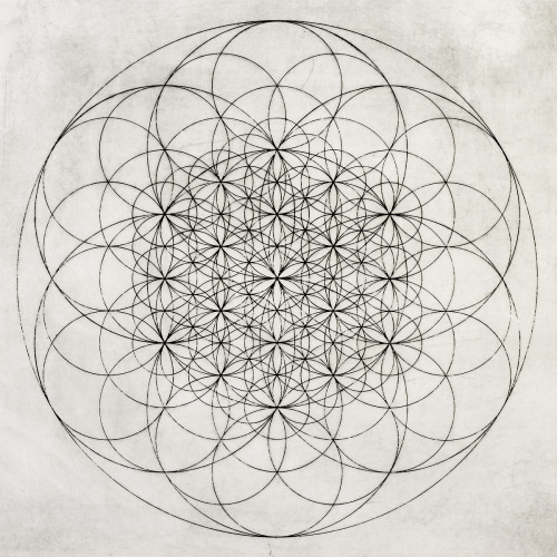 slychedelic:  Flower of Life, Chad Lassin