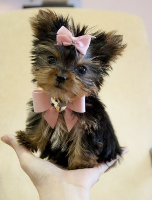 This puppy is so adorable!! I want one like this!