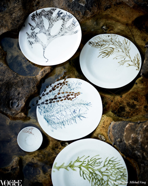 Chinchin Trader's 'Seaweed Collection' handmade and hand-painted porcelain plates by Jodi Dawson, submerged in a rock pool with Hormosira banksii (Neptune's necklace), an alga found in Australasia. From 'Seaweed', a story on page 133 of Vogue Living Nov/Dec 2011. Photograph by Mikkel Vang.
