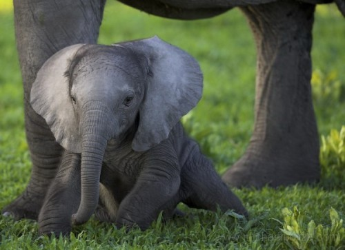 Baby Elephant by Michael Poliza