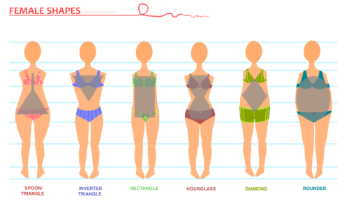 youngartist-city:  Body shapes you should take note of.