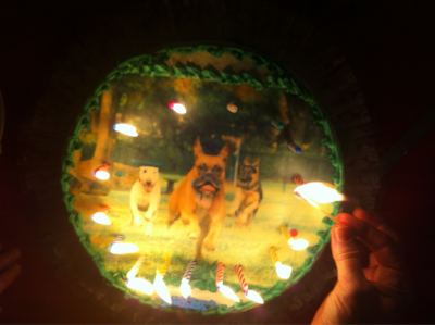 Happy Bday Mr. Harper! #dogs #birthdays #cakes