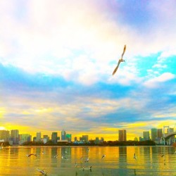 おもいっっきり 飛びたーい! #clouds #雲 #夕焼け #twilight #birds #鳥 #sky #空 #海 #sea #water #nature #自然 #japan #tokyo #photooftheday #iPhoneography (Taken with instagram)