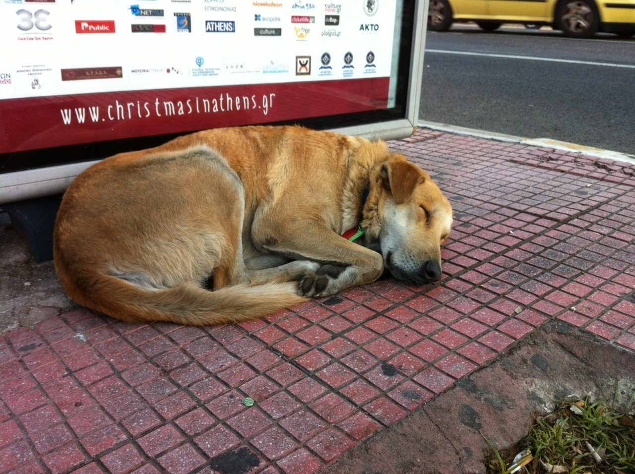 rebeldog:  29 dec 2011 Christmas in Athens for Loukanikos and 20.000 homeless people  photo by emmy