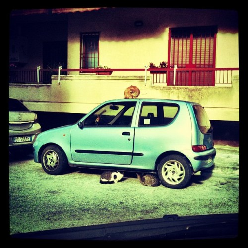 #fiat #500 #cinquecento : the #best #car for #cats - la #migliore #auto secondo i #gatti #animal #pets #italy #Caserta #picoftheday #instafamous #instagood #instagram #igersitalia #instagramers #popular #20likes #colore_italiano #parking #colonna_sonora #stray_cats #rock #city #invasion #surprise  (Taken with instagram)