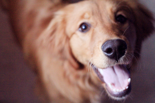 carissa-xy:  happy puppy!