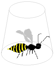 I just caught a wasp in our living room. A fucking wasp. In JANUARY. Must have hibernated or something somewhere inside. I do not like wasps. I do not like wasps in winter. I don't like wasps in summer. I do not like wasps at all. (Sam I am.) I tried to take a picture of it with my mobile, but the camera on it is all kinds of crappy, so it was just a black and yellow kind of blur, made even blurrier by the glass I trapped it under. So I drew it for you guys. It looked exactly like that, only not at all.