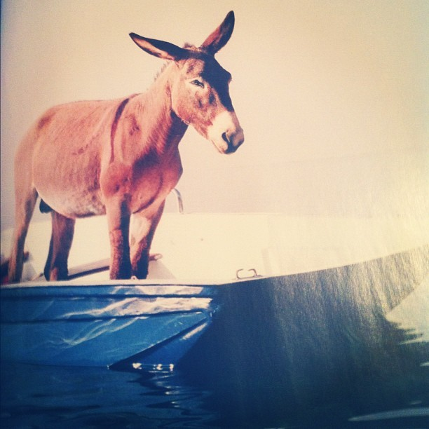 #donkey on a #boat Looooool #esh (Taken with instagram)