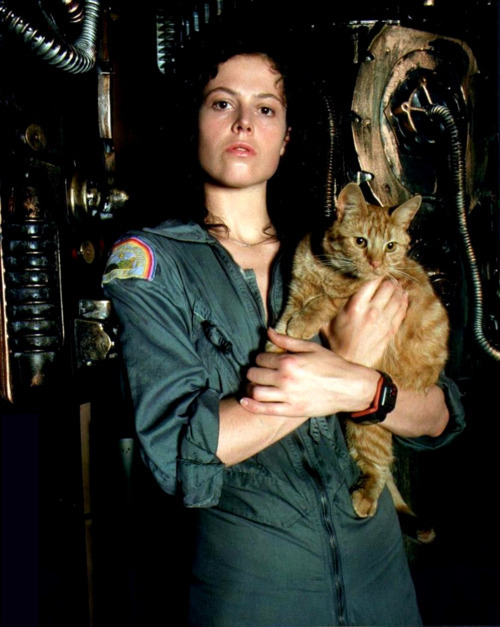 wildhorsesoffire:  Alien