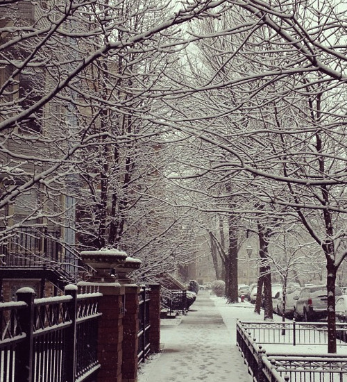 It's finally snowing! My street looks so picturesque right now!