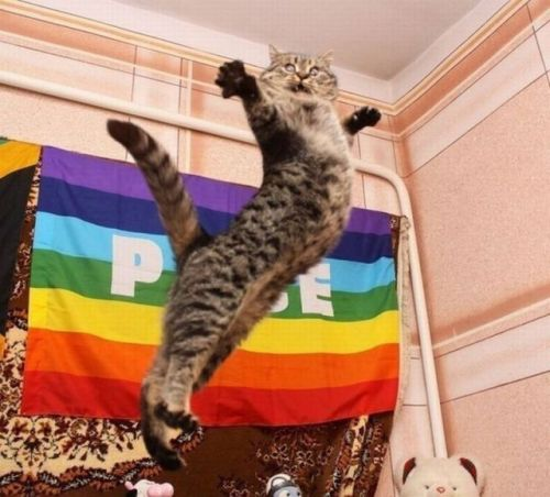 loveincolororg:  GAY CAT PRIDE!