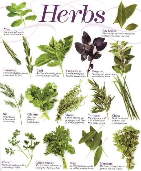 toutcru:  Herbs ParsleyLabels: HerbsUses: A strong diuretic; helps strengthen the immune system as a source of iron, calcium, and vitamins A,B and C; increases lactation in mothers; freshens breath if chewed raw.Parts Used: Leaves, roots, stems, seedsHarvest: Leaves in early summer, rots in the fall, seeds in the late summer of the next year.Shelf life: Leaves, stems, roots 1-3 years; seeds 3-4 years.Caution: Avoid during pregnancy. OreganoLabels: HerbsUses: Chewing oregano leaves, which are easily available from shops and supermarkets, is a perfect way to help relieve toothaches. Oregano in a fusion or tea helps to ease both coughs and indigestion and can bring on delayed periods.Parts Used: Leaves, stems.Harvest: As needed from a mature plant.Shelf Life: 1-3 years. SageLabels: HerbsUses: As a soothing, astringent skin lotion and aftershave. In tea it is a natural HRT treatment and eases colds and painful periods. Mix tea with cider vinegar as a gargle for sore throats and laryngitis. As a mouthwash to combat ulcers and gum infections. The juice can improve the shine of dark hair. Clary Sage shares many of its characteristics and can be used instead.Parts Used: whole herb, leaves.Harvest: As needed or, if drying, in the summer.Shelf Life: 1-3 years. ( Wild ) ThymeLabels: HerbsUses: Drink as a tea for headaches and mild pain relief. It is also thought that a tea made from wild thyme can prevent nightmares. Take as a tincture for congested chests. A strong infusion of this herb will help ease flatulence and other digestive complaints.Parts Used: Flowering herb.Harvest: When the flowers are in full bloom-from May to October. If drying, toward the end of summer.Shelf Life: 1-3 years. ( Wild Herb ) BasilLabels: HerbsUses: Olive oil infused with wild basil has long been used by villagers in Northern Greece to treat ulcers and wounds. Basil tea eases stomach complaints while the leaves, added to a salad and other foods, help digestion. Drink an infusion to strengthen the immune system. Parts Used: Leaves.Harvest: Use as needed. If drying, harvest in spring or early summer.Shelf Life: 1-2 years.