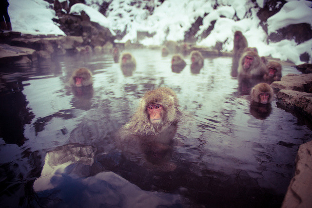 bath time by mattbenn8 on Flickr.