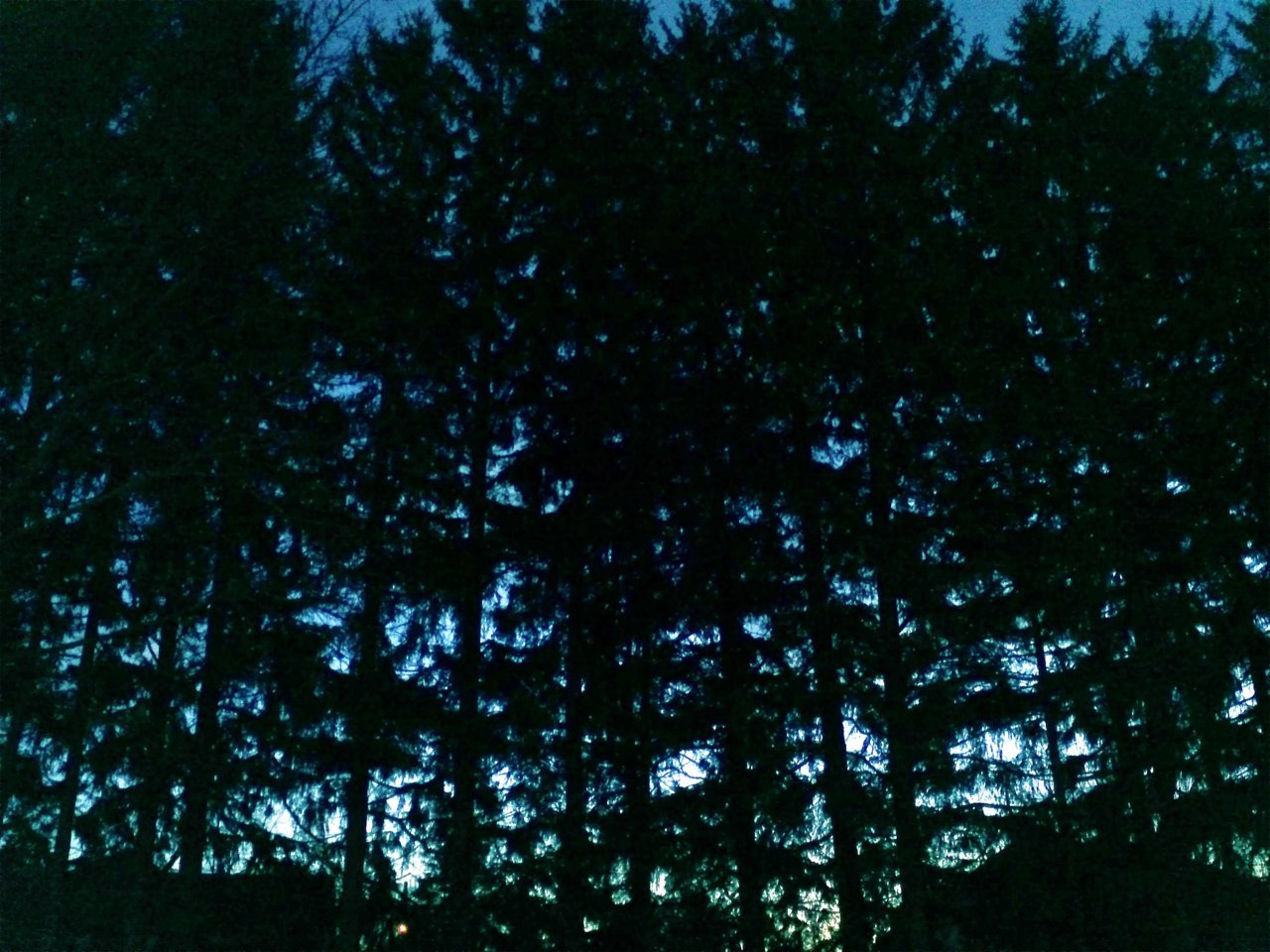 night trees