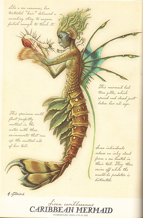 Illustration by Tony DiTerlizzi for Arthur Spiderwick's Field Guide to the Fantastical World Around You.