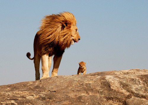 """Everything the light touches is our kingdom"" Real life Lion King :)"