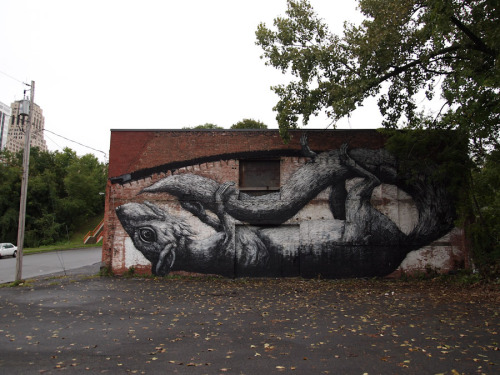 kimblasiansue:  ROA Around the World: Squirrel; Albany NY, Living Walls 2011 thanks to Samson Contompasis the Great! Image by the wonderful Luna Park.