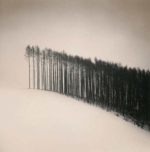 nevver:  Forest Edge, Michael Kenna