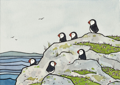 rhamphotheca:  illustration of Puffins on the Coast of Maine (by david shierer)  moar puffins!