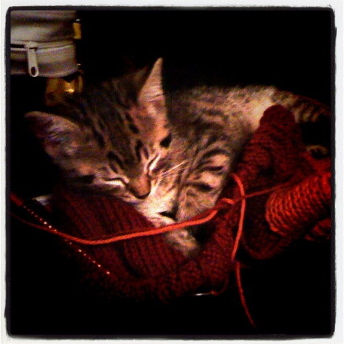 My knitting kitten.
