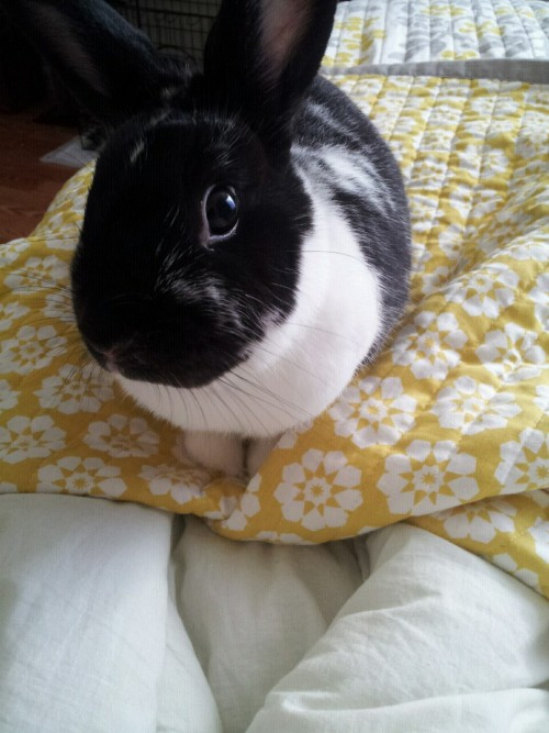 My handsome devil of a rabbit, Vendetta <3