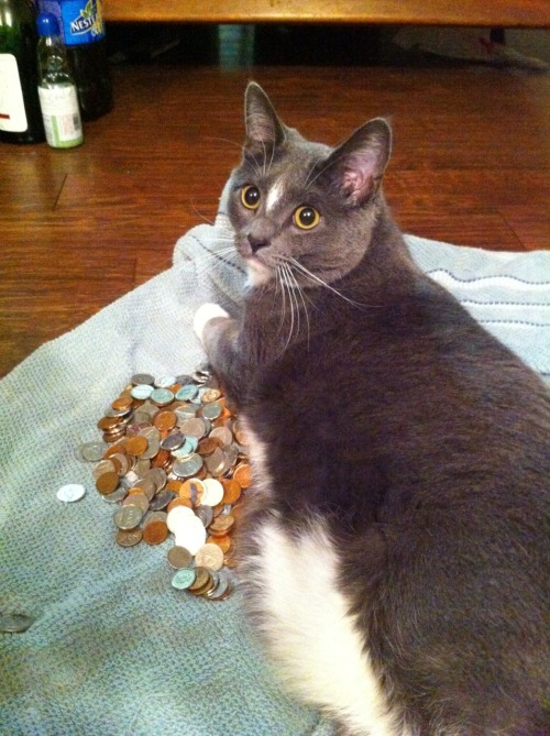 getoutoftherecat:  get off of there cat. i do not need a coin warmer. i gotta get to coinstar before wal-mart closes. yes some wal-marts close. shocking i know.