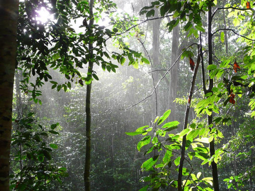 Sunlight Through Jungle Rain II by ighosts on Flickr.