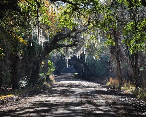 intracoastal-wanderings:  Tunnel of treesEdisto Island, SC