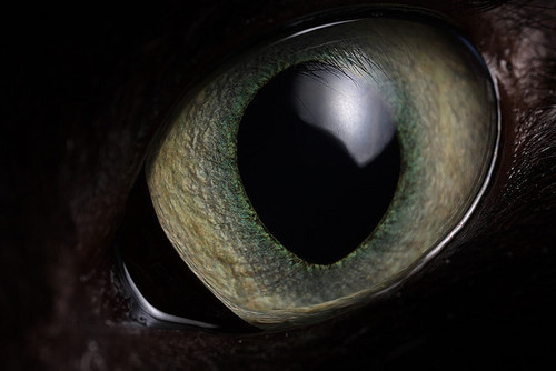 Cat's eye By Lord V
