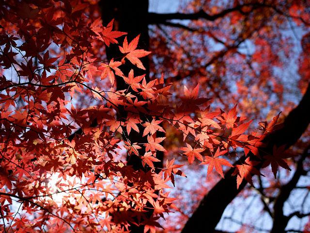 年も越える紅葉 by tantake on Flickr.