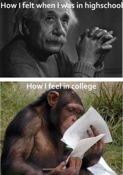 how i felt back in high school and how i feel now -___- currently studying secretions of colon for my AS exam on monday. I still have ALL the anatomy of the abdomen, pelvis and perenium to go through and right now i think that monkey could do a better job of passing than i can. i went from being an overachiever smartass know-it-all to a thickheaded buffoon high on caffeine.